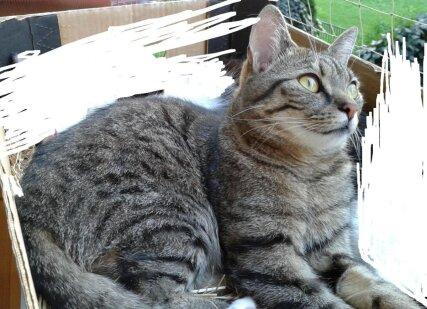 Zaginął Kot 1000 Zł Nagrody Za Odnalezienie Jude Reporterzy