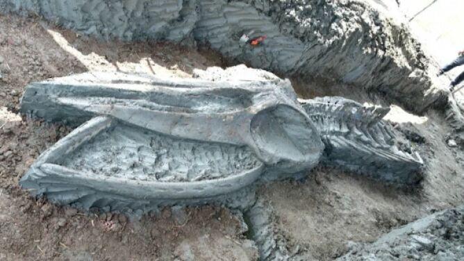 """Odkryty szkielet wieloryba sprzed tysięcy lat. Otwiera """"okno w przeszłość"""""""
