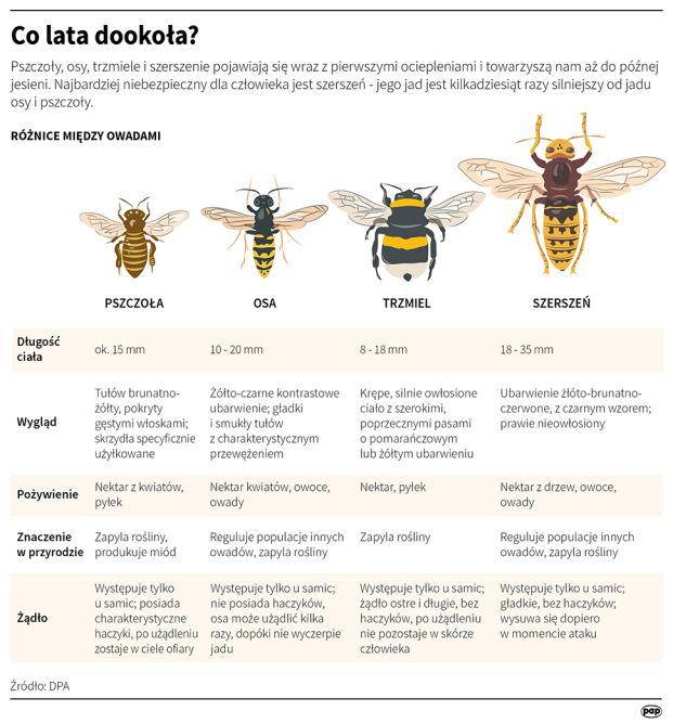 Pszczoła, osa, trzmiel, szerszeń. Jak je rozpoznać (PAP/DPA)