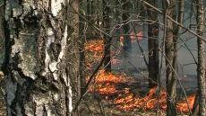 620 pożarów lasów. Najwyższy stopień zagrożenia