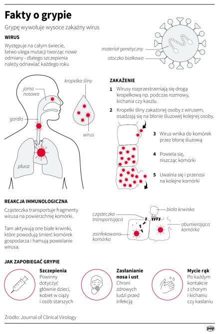 Fakty o grypie (Maciej Zieliński/PAP)