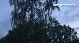 Złamany przez burzę konar zranił dzieci (TVN24)